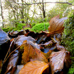 damp-autumn_10857162535_o.jpg