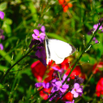 the-butterfly_8446011170_o.jpg