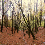 woodland-in-autumn_10821073015_o.jpg