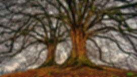 tree-Posterized.jpg