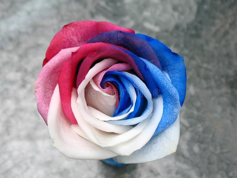 Simbología de las rosas en el BDSM