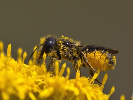 Die Insekten wollen einfach nicht (aus)sterben