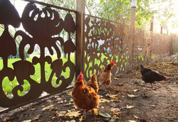 Metal Chook Yard Fence