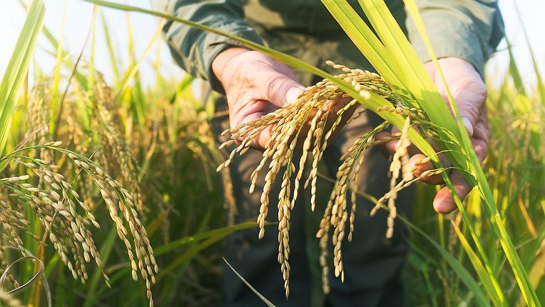 Grain-measurement-device.jpg