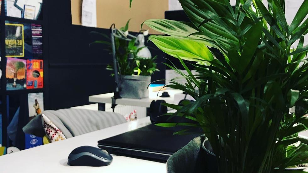 Rośliny w coworkingu