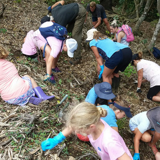 Wairoa Stream: Guides, Brownies and Pippins bust the weeds
