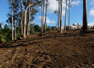 Wairoa Stream: Public Planting day Sunday, 16 July