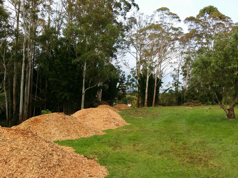 Mulch from felled trees