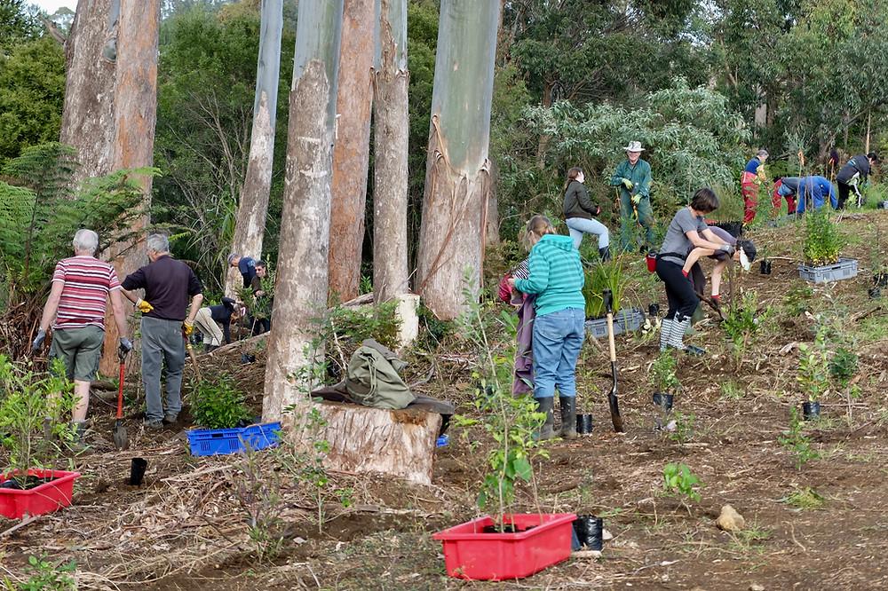 Volunteers planting Wairoa Stream Kerikeri 2017