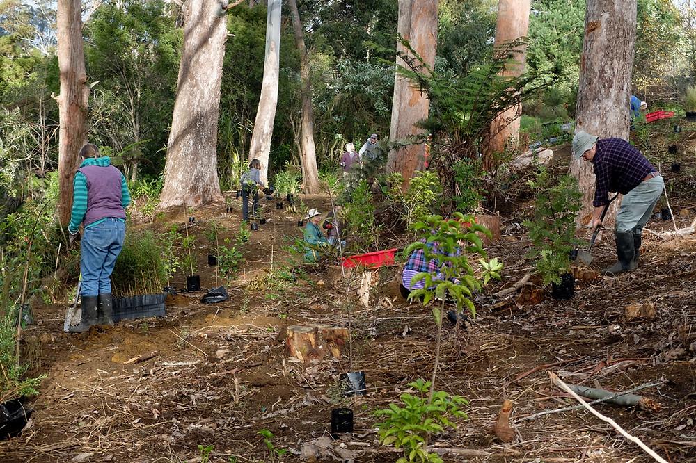 Planting Sammaree Reserve Kerikeri 2017
