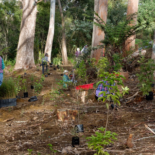 Wairoa Stream: Public planting Sunday, 9 June 2019