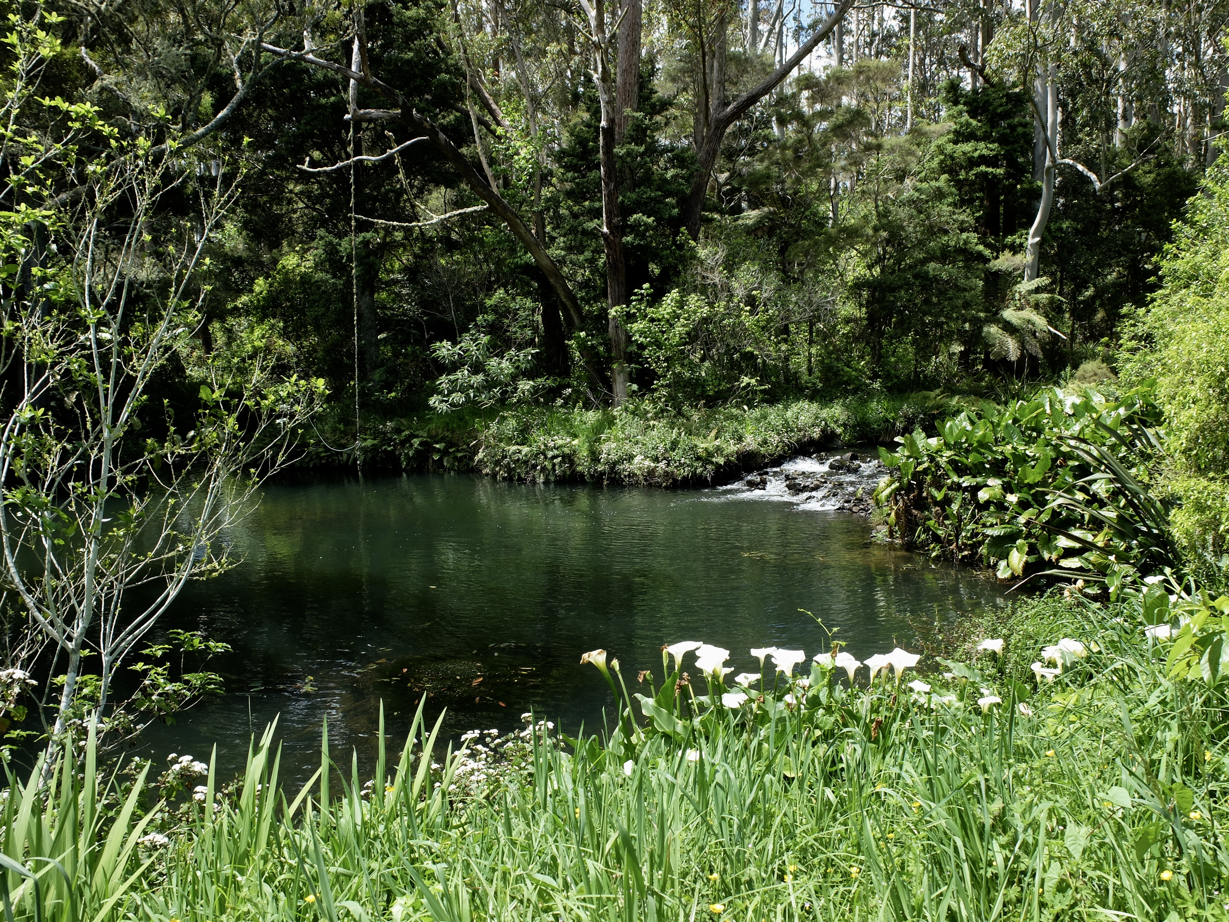 Old swimming hole