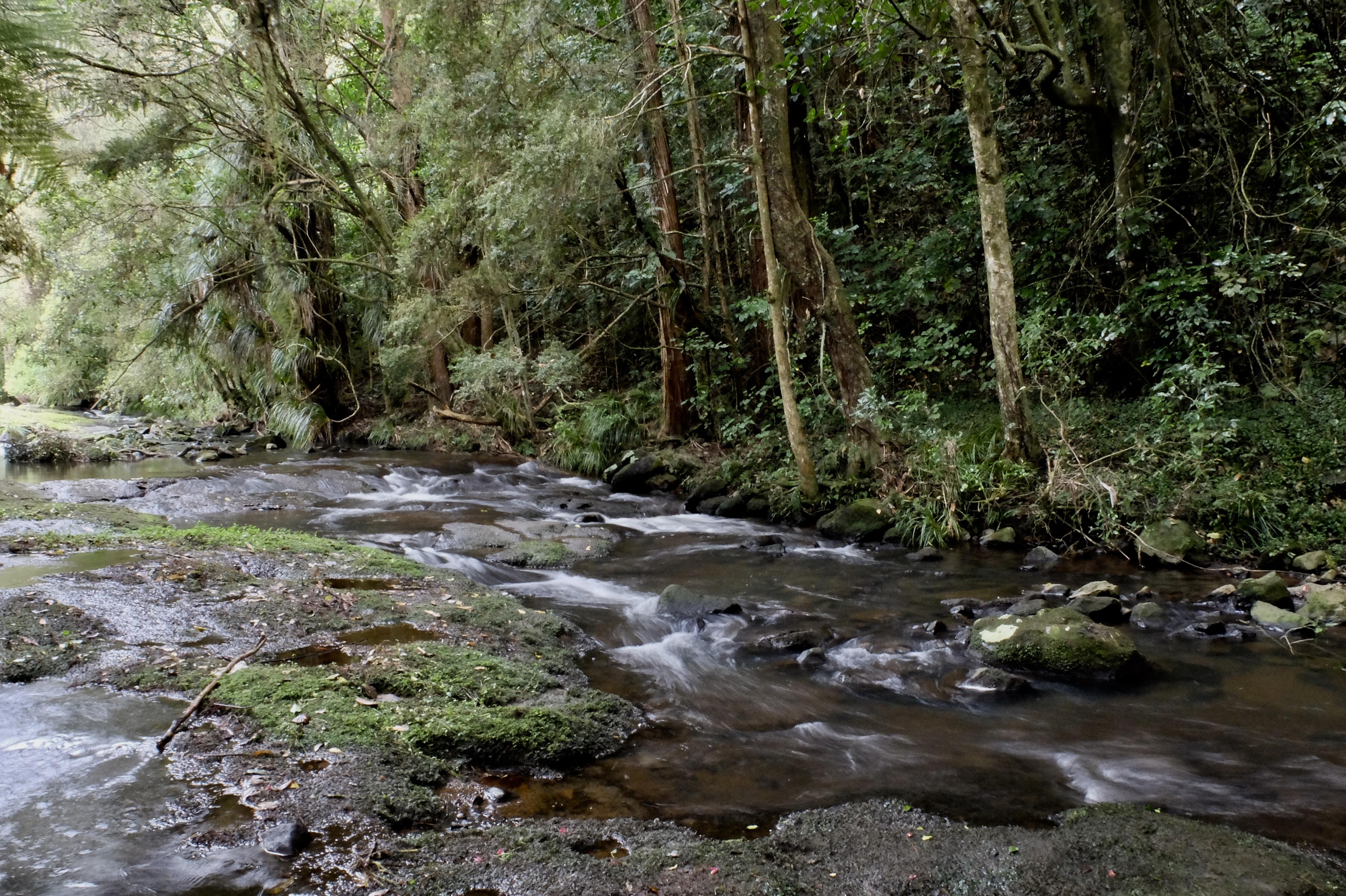 Wairoa Stream