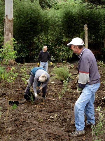 Wairoa Stream Planting day