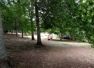Roland's Woods: Kerikeri do we want a public reserve or ?