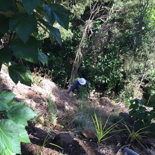 Wairoa Stream Projects: 7 years in and still plenty to do