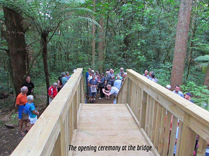 Track to Te Wairere Waterfall and Jim and May Brodie bridge now open