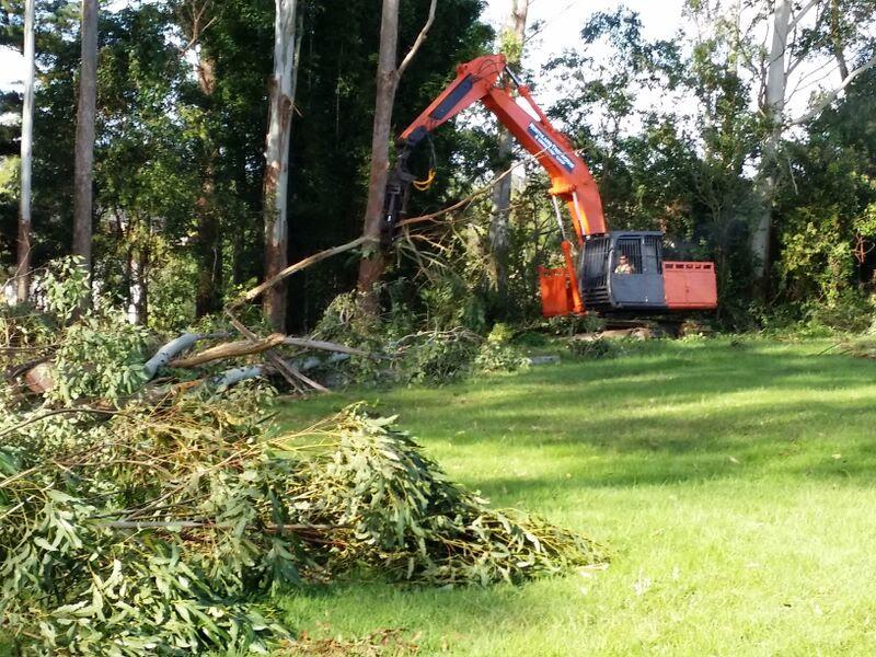 Tree felling underway