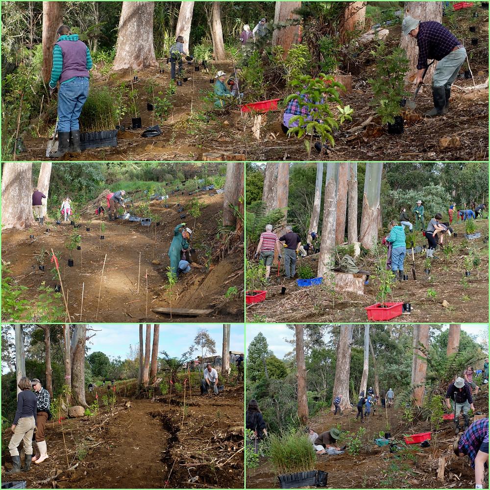 Volunteers planting Sammaree Reserve in Kerikeri