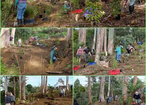 Sammaree Reserve Planting