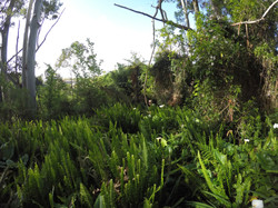A jungle of weeds