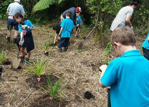 Kerikeri Primary School planting on Wairoa Stream