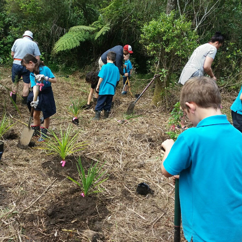 Kerikeri Primary School pupils planting along the Wairoa Stream
