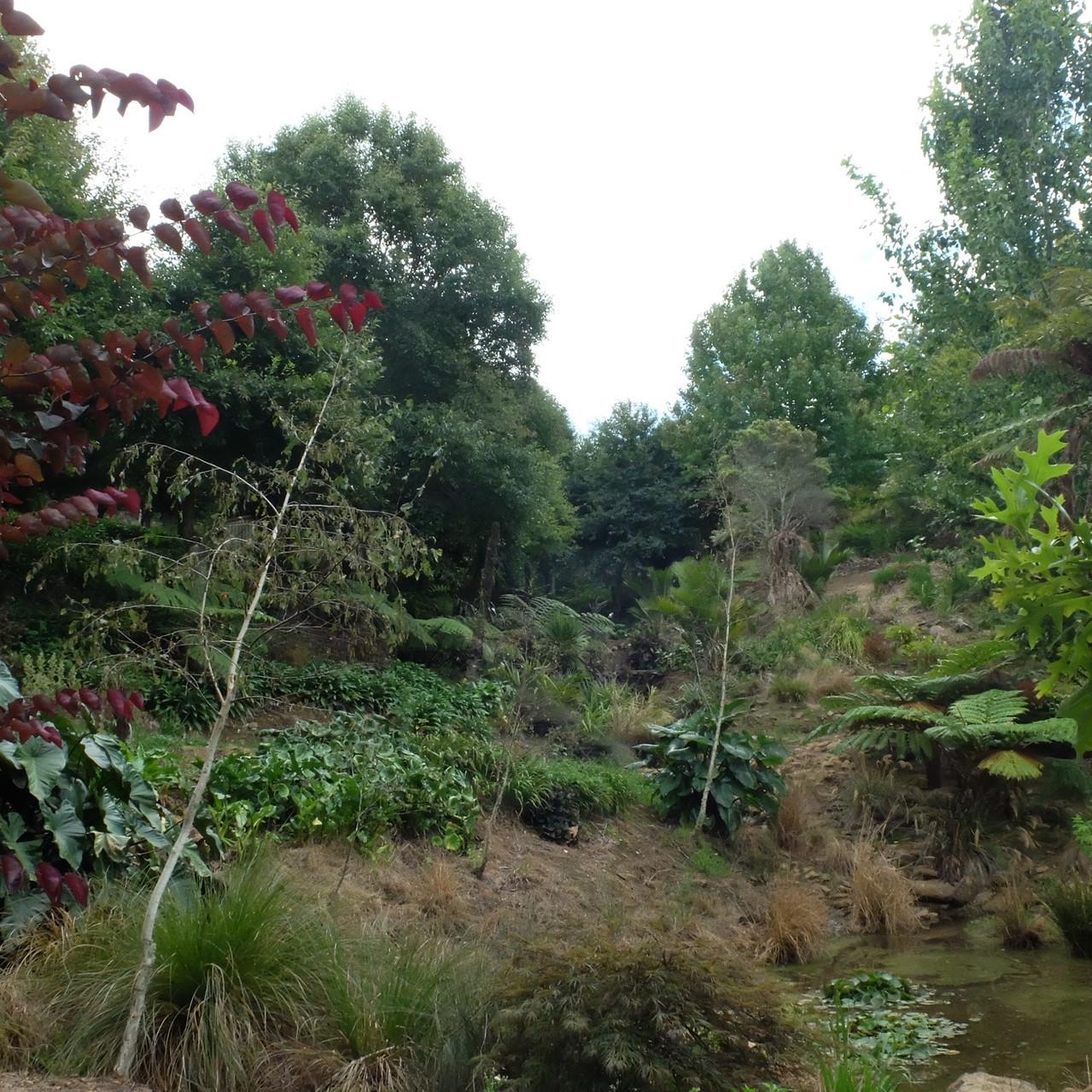 Roland's Woods