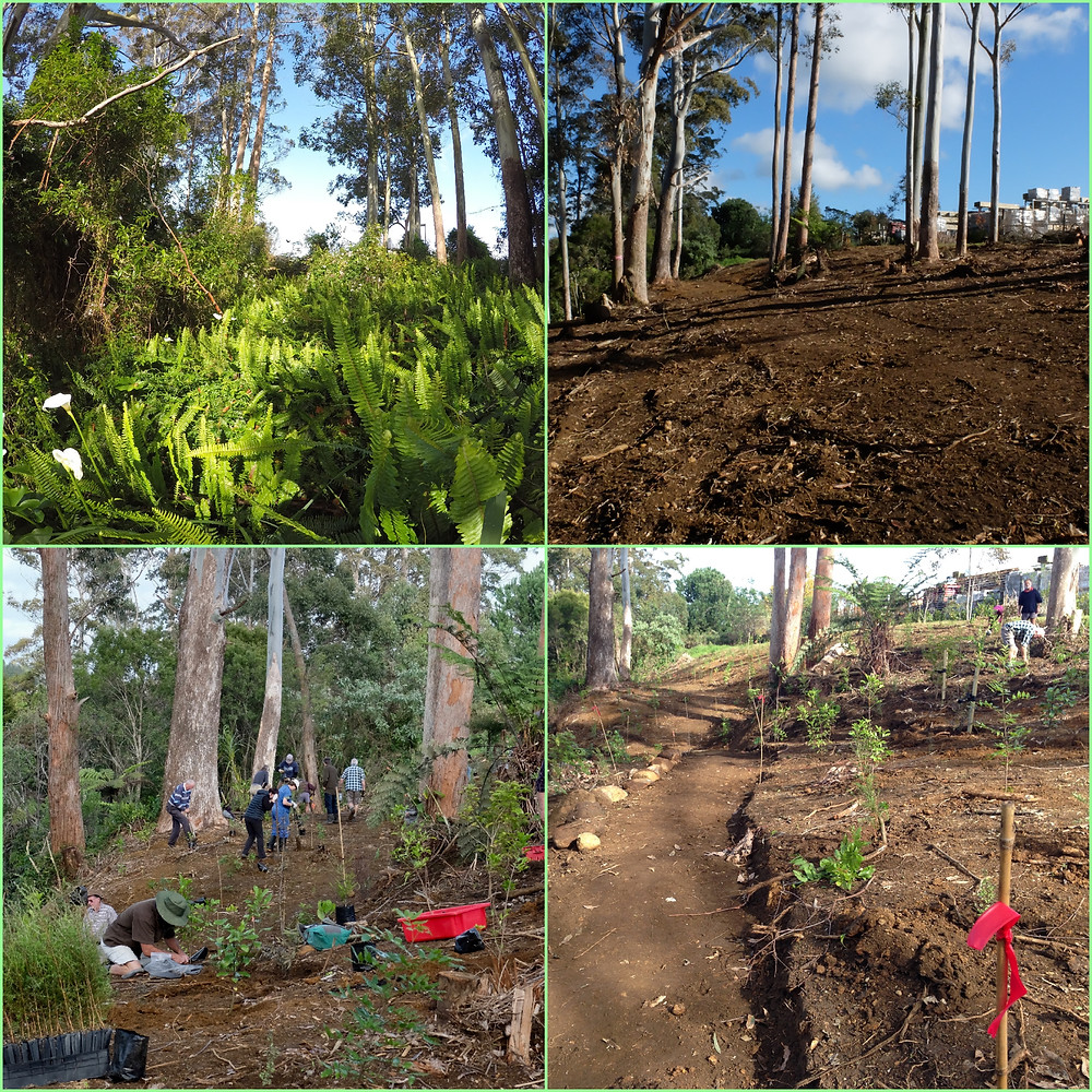 Before and after images of Sammaree Reserve planting 2017