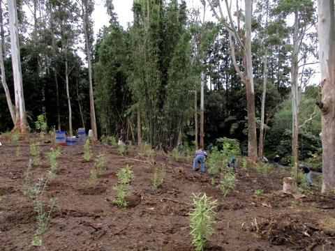 Wairoa Stream planting action