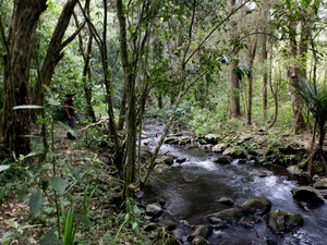 Te Wairere Waterfall Track: Map & Track Notes