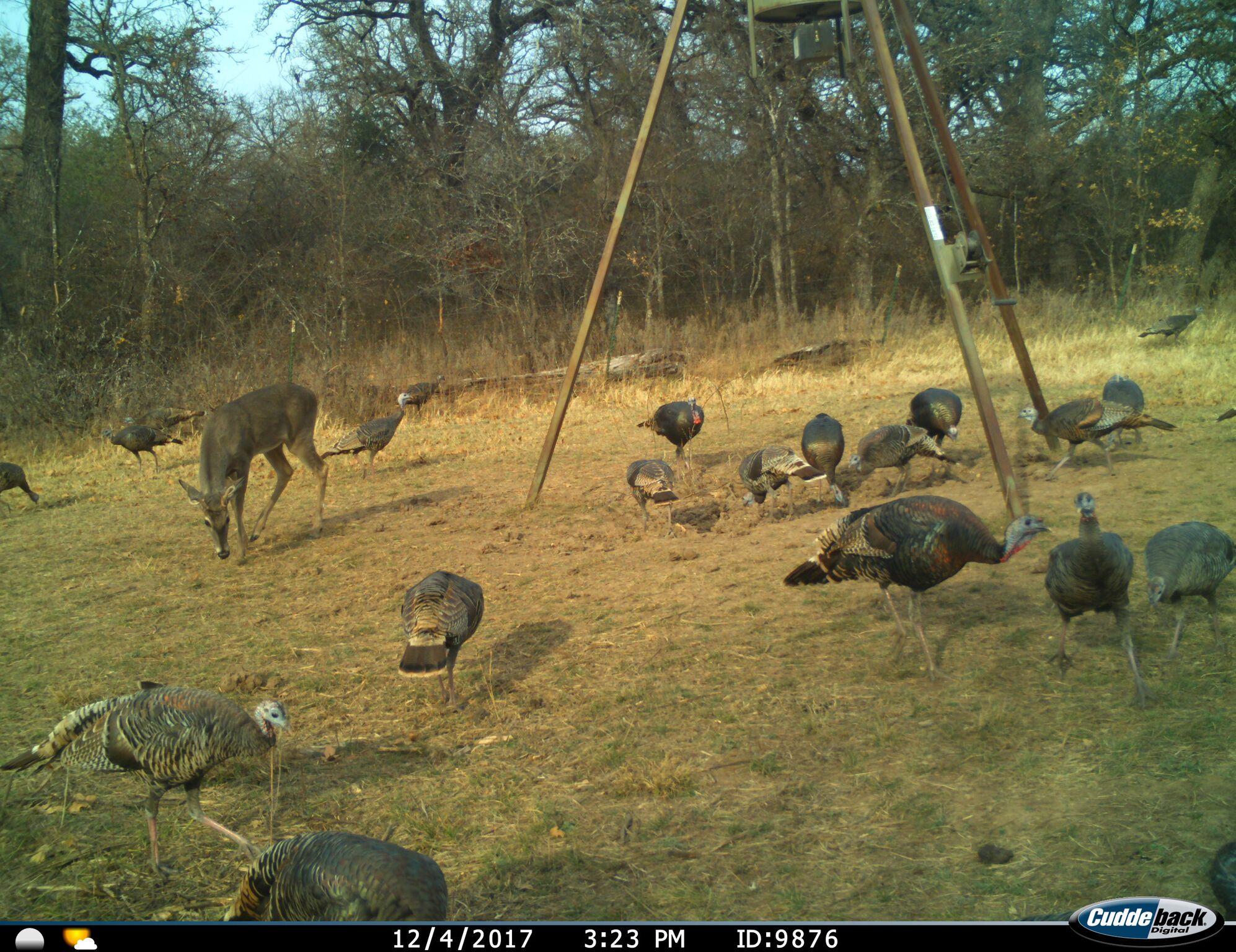 Turkey Hunts Available