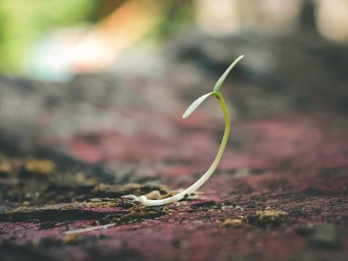 La semilla del Reino