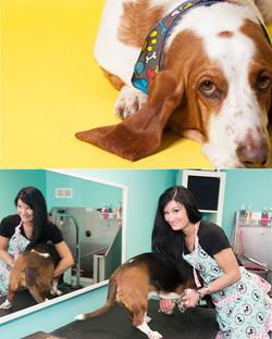 Megans Dog grooming comp.jpg