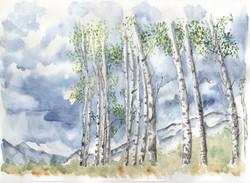 Doug's Poplars2
