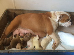 Piklett and her new babies
