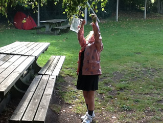 Ash Class working with Trees for Dorset