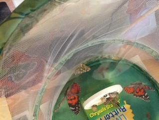We Have Butterflies!