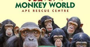 Monkey World Visitor
