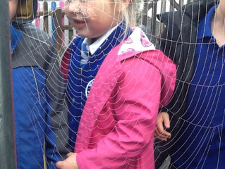Spider Web Hunt!