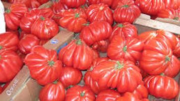 Tomates coeur de boeuf   fr