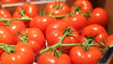 Tomates grappe  française