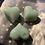 Thumbnail: Alien type  fragrance Bleeding 🩸 hearts ♥️ soy wax