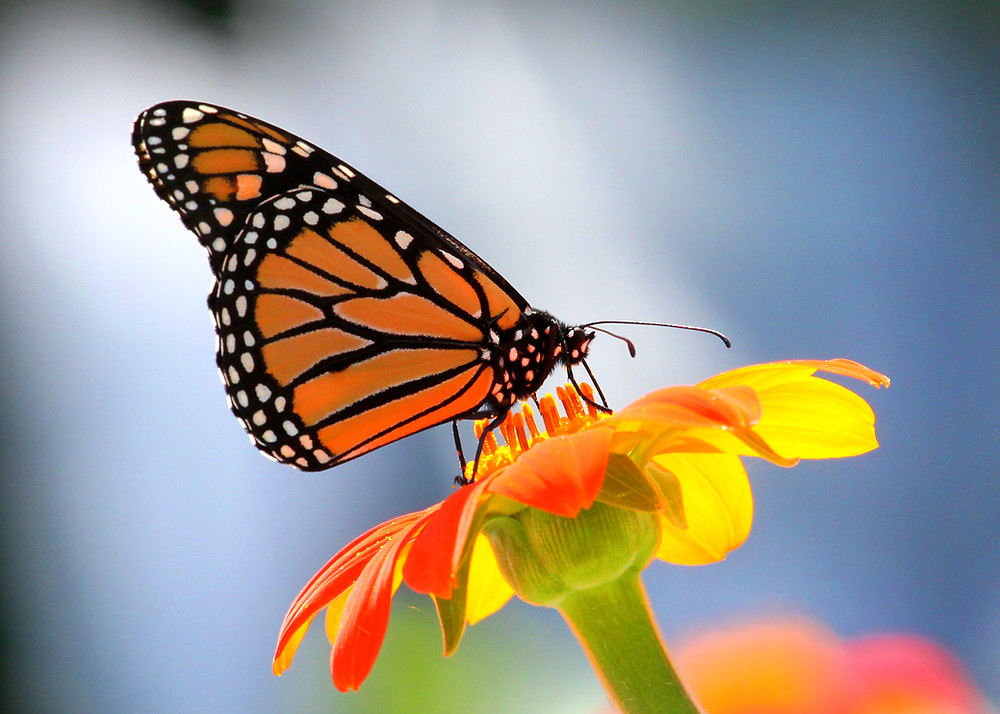 Nature photo, Janderson Photography