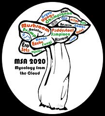MSA2020.png