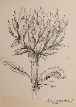 Encre au calame sur papier. 30 x 42 cm