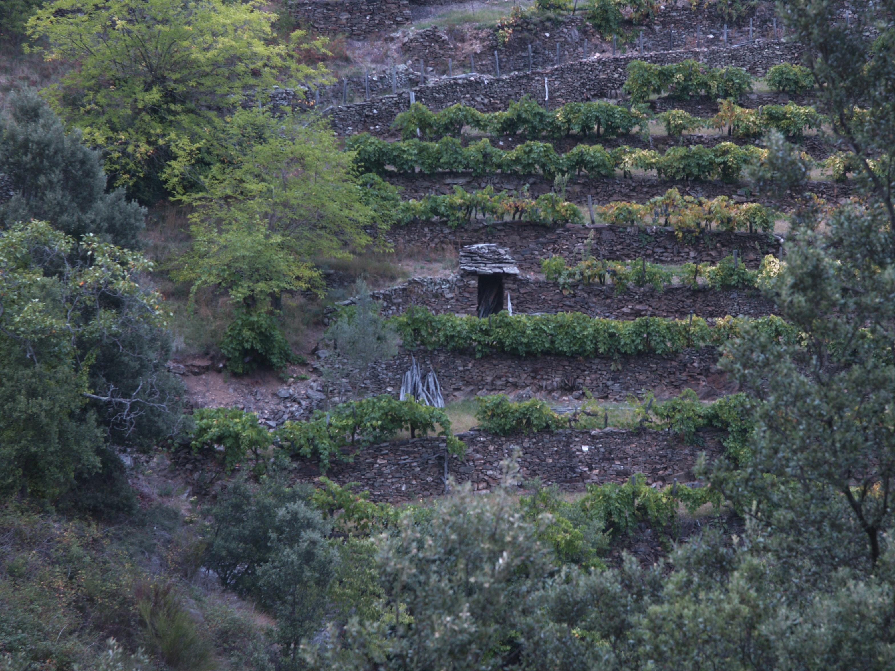 Terrasses de schiste, jardin