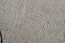 Séquoïa