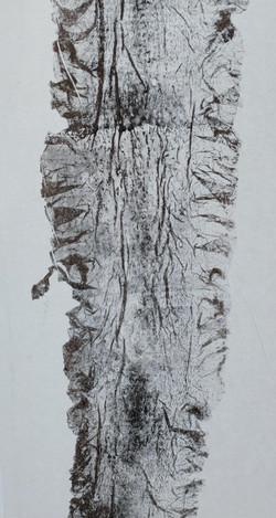 Monotype de laminaire. Détail