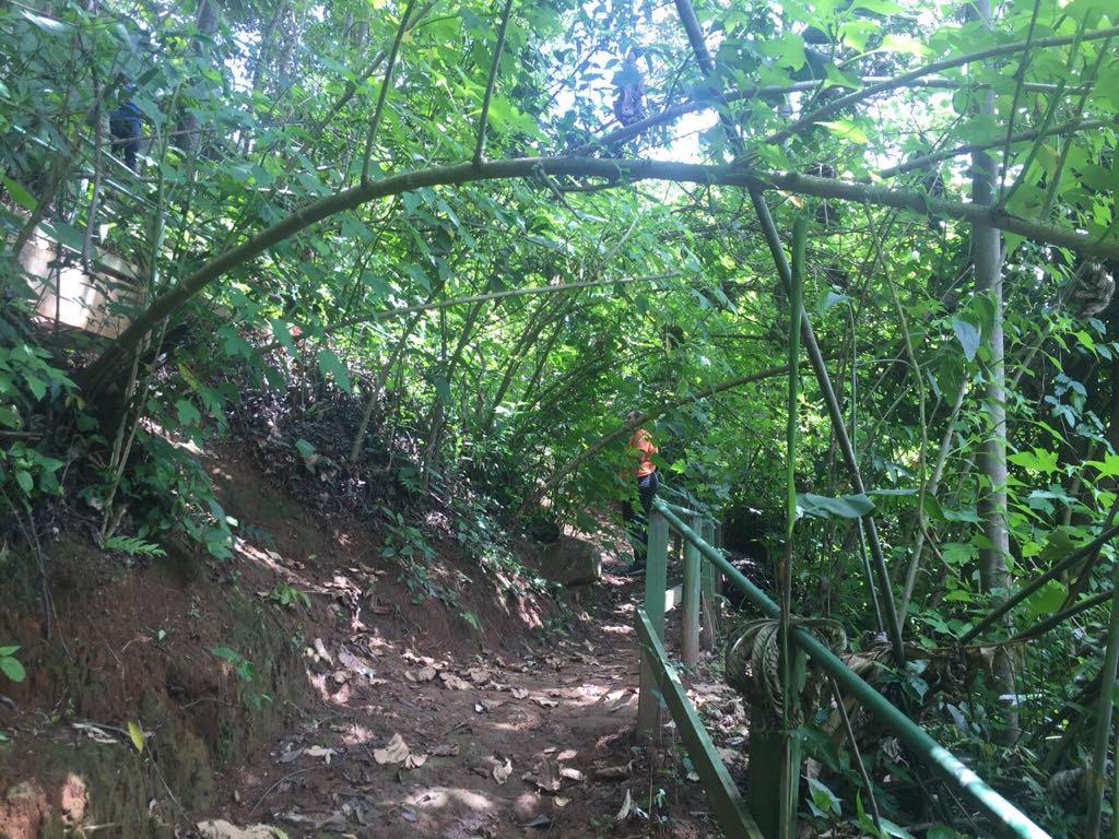 Bosque | Nova Friburgo | Miosótis